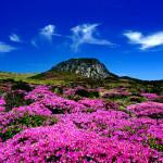 du lịch đảo Jeju