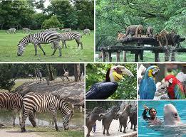 Safari World - Trung tâm vui chơi nổi tiếng ở Thái Lan