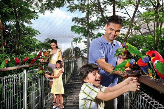 Vườn chim Jurong nơi thu hút nhiều du khách đến khám phá