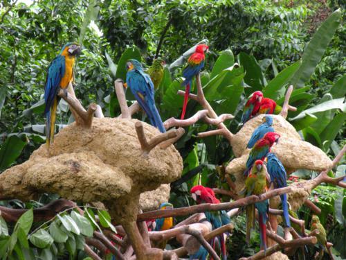 Vườn chim Jurong- Thế giới loài chim