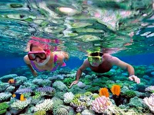Lặn ngắm san hô biển đảo Cát Bà