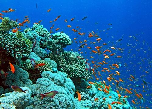 Chiêm ngưỡng các loài cá rực rỡ sắc màu