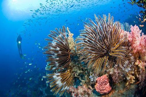 Vẻ đẹp của rạn san hô Cát Bà