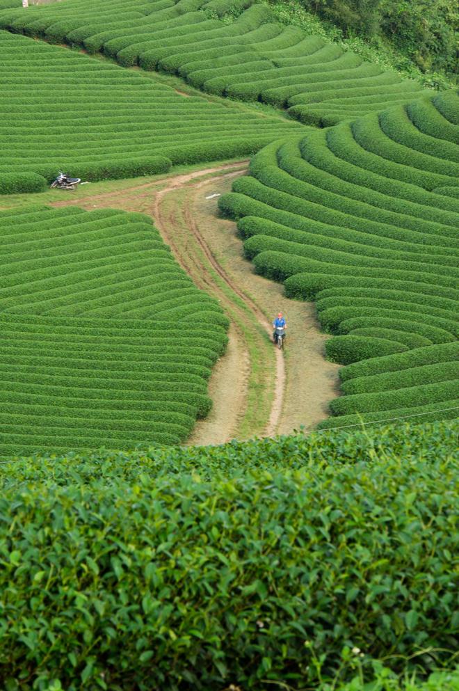 Con đường đất nhỏ tiến sâu vào bên trong đồi chè