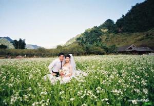 Cặp đôi chụp ảnh cưới với hoa cải