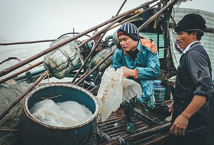Ngư dân Hải Hòa vào mùa đánh bắt sứa